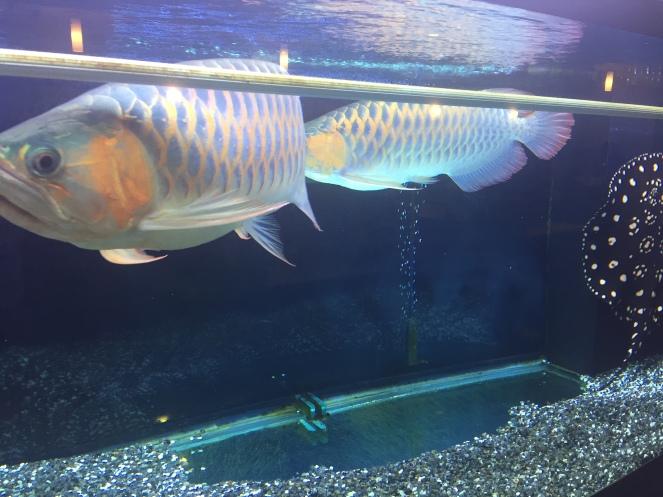 fish one.jpg